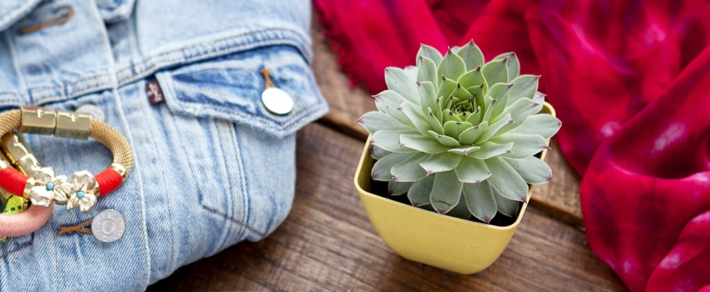 Best Plant Gifts