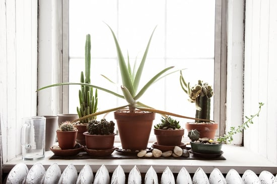 Do You Keep Potted Plants on Your Windowsill?