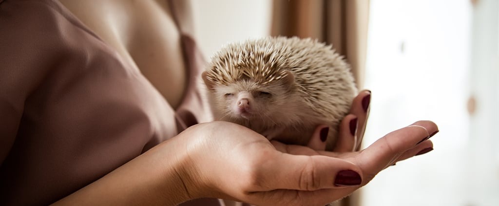 12 of the Best Pets for Busy College Students