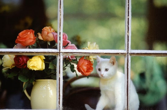 Pet-Proofing Your Home: Poisonous Plants