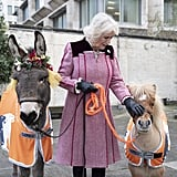 Camilla, Duchess of Cornwall, met a donkey named Ollie and a cute pony named Harry during a charity event at the Guards Chapel in December 2018.