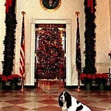 Springer Spaniel Millie looks regal posed before festive decor in the White House's East Wing. Source: The White House Historical Association