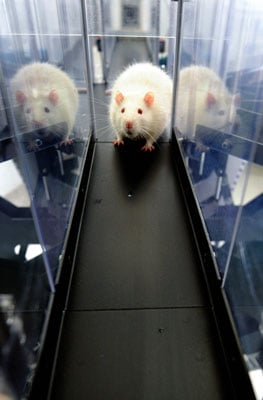 Rats Sniff out Land Mines in Columbia