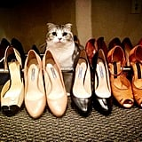 When Meredith got to hang out in a shoe collection that costs more than your yearly rent