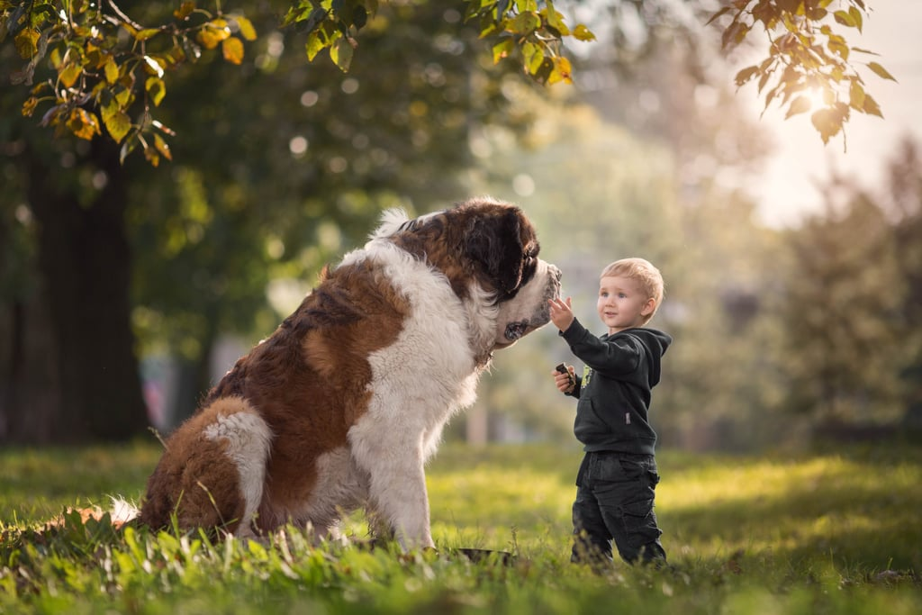 Photo Series on Big Dogs and Little Kids