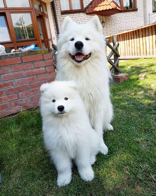 10 Most Expensive Dog Breeds | POPSUGAR Pets