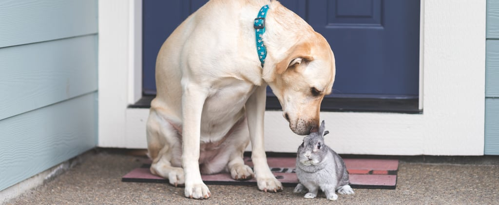 The 9 Small Pets That Are Good to Have With Dogs