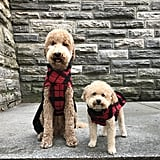 Fabdog Red/Black Plaid Bouclé Coat