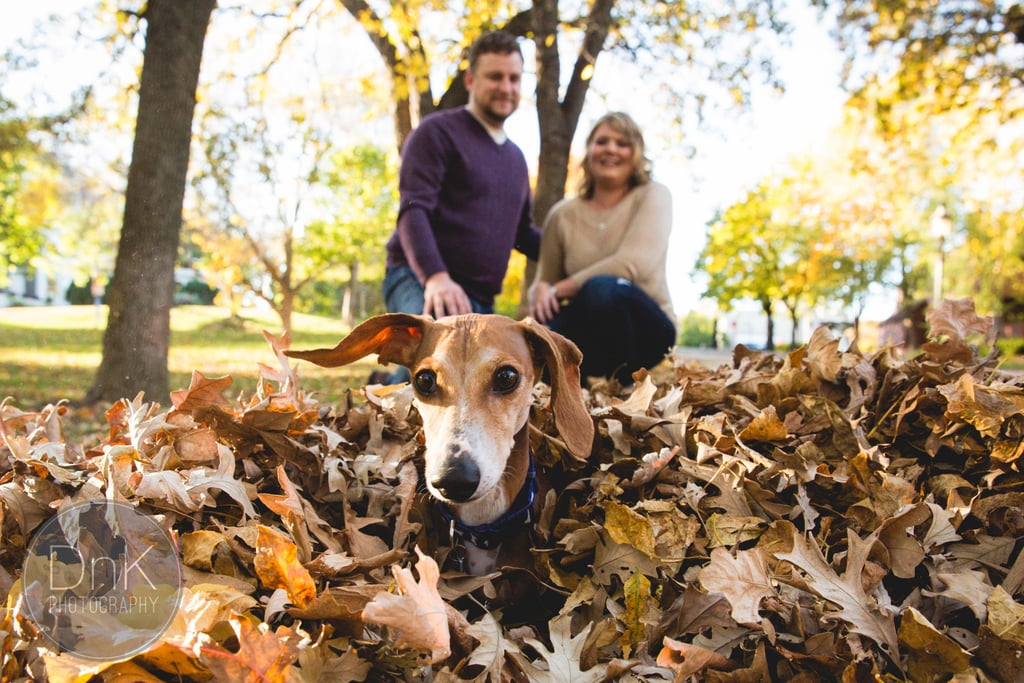 Dog Photobombs Engagement Photo Shoot by Playing in Leaves