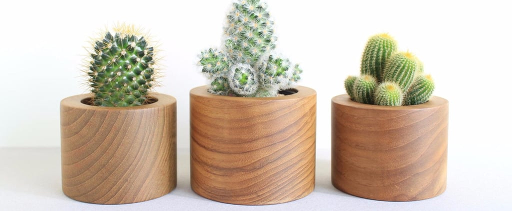 Stylish Plant Holders to Refresh Your Home For Under $25