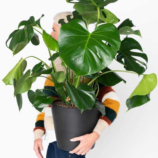 30 Houseplants to Buy Online and Have Delivered to Your Door