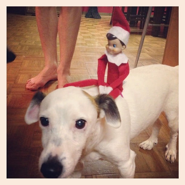 Let Him Ride Elf On The Shelf Ideas Popsugar Moms Photo 50