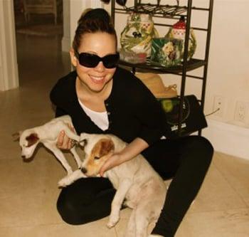 New Puppy Alert! Mariah Carey