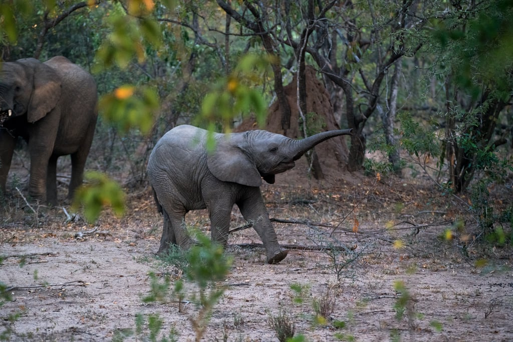 Responsible Wildlife Encounters Travel