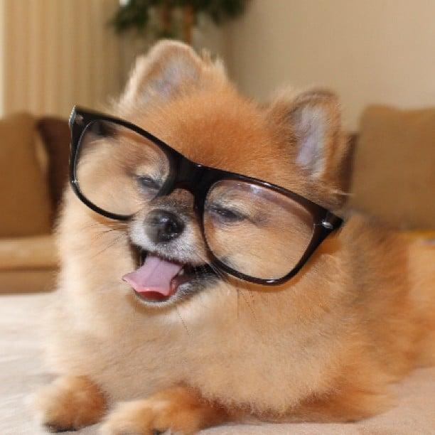 yay dogs wearing glasses popsugar pets photo 10