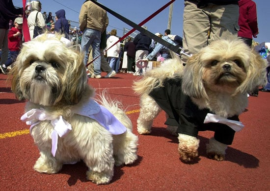 I Need Your Help . . . Must Two Dogs Equal Two Leashes?