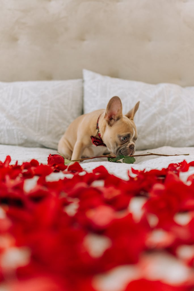 Valentine's Day Dog iPhone Wallpaper