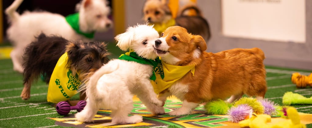 Things You Didn't Know About the Puppy Bowl