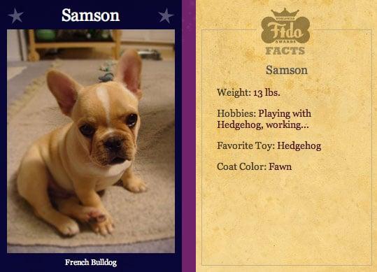 Samson Cute For Worldwide Fidos