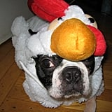 Howl-oween: North's a Rooster