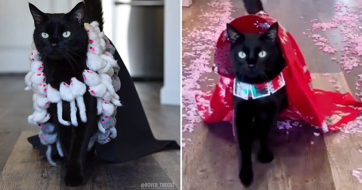 """This Stylish Feline's Strut Down the """"Catwalk"""" Is Proof He's the Purrfect Runway Model"""