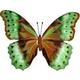 Ernies-Butterfly
