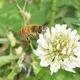 mikeshoneybees