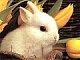 Ms-Bunny